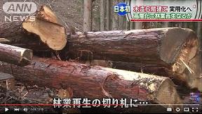 木造6階建て実用化へ