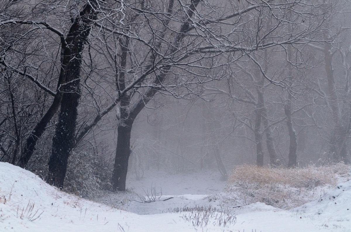 雪の朝 078-2s