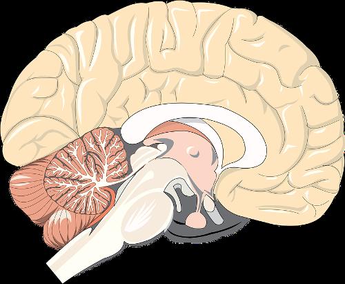 brain-1132229_960_720.png