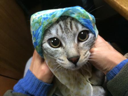 シオちゃんスカーフ