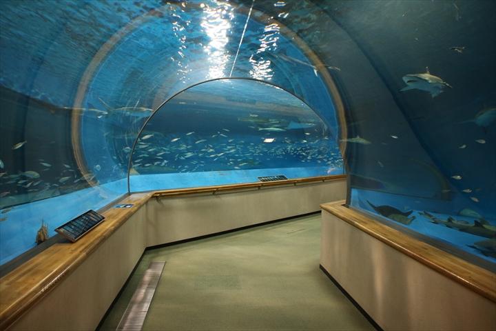 大水槽トンネル