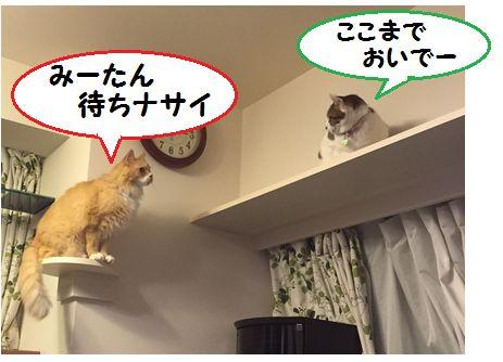 あーみー小芝居①