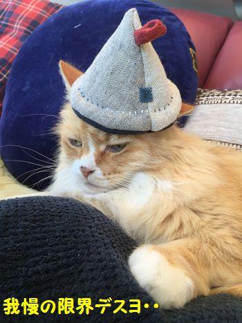 あーの帽子④