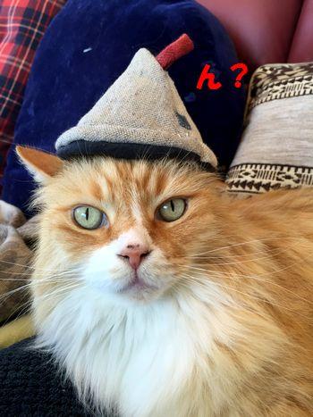 あーの帽子②