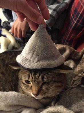 まーの帽子