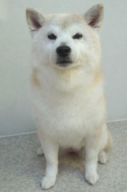 生稲ふう★1