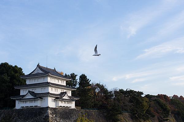 清洲櫓とユリカモメ