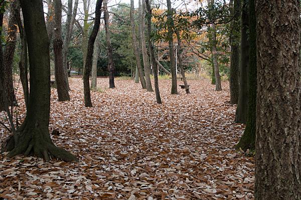 枯れ葉の雑木林
