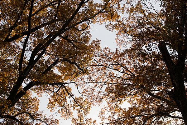 西日と冬の木々