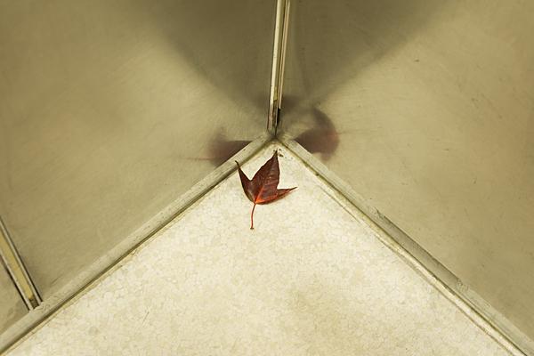 エレベーターの中の紅葉