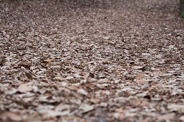 枯れ葉の散策路