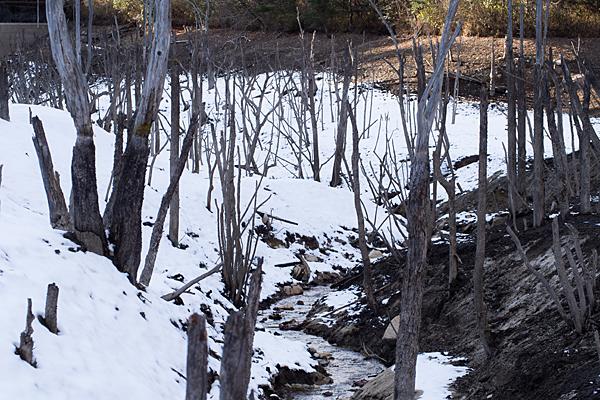 海上池の立ち枯れ冬風景