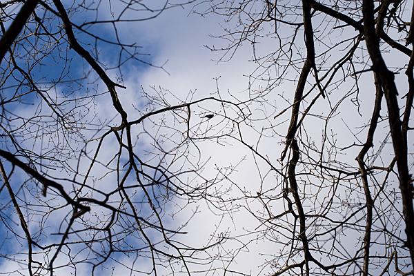 冬枯れの木とエナガ
