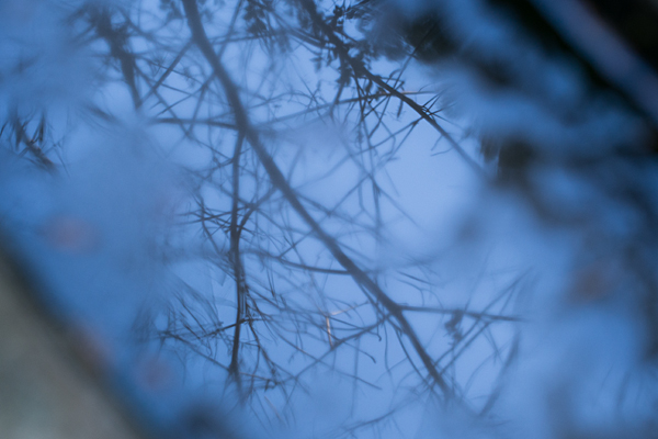 手水の氷と映り込み
