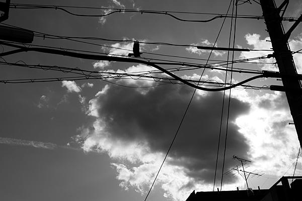 電線とカラス