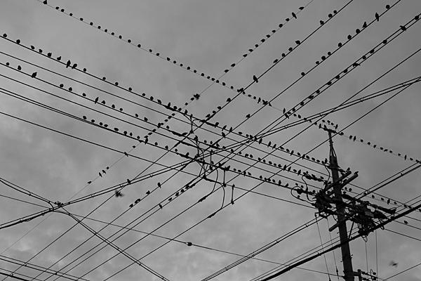 電線と街の鳥