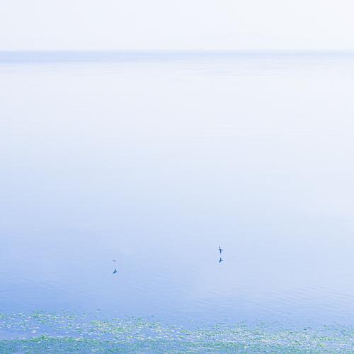 吉良の海後画像