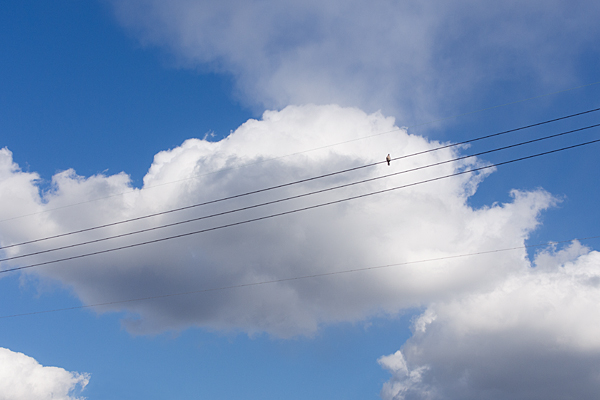 空と雲と鳩
