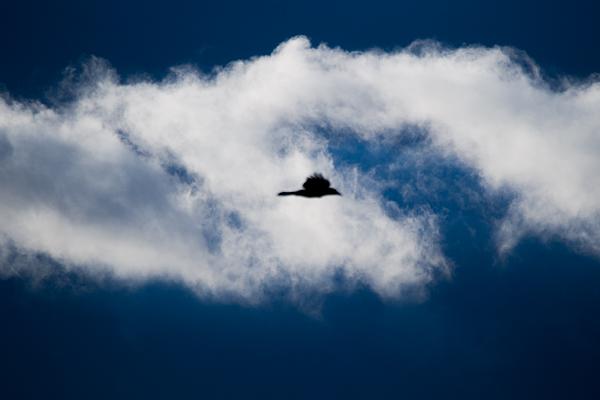 カラスと雲