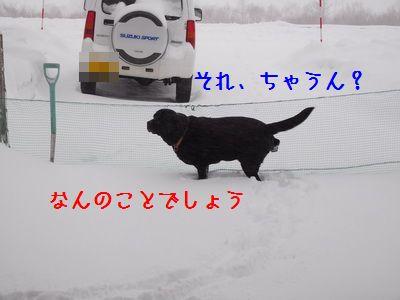 DSCN4672_20160309203036b6f.jpg