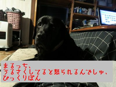 IMG_0494ZZ.jpg