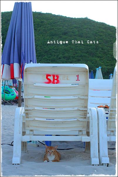 ビーチチェア ラーン島 เกาะล้าน Koh laan Island ターウェンビーチ หาดตาแหวน Tawaen beach