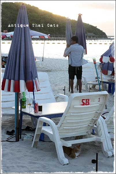 店じまい ラーン島 เกาะล้าน Koh laan Island ターウェンビーチ หาดตาแหวน Tawaen beach