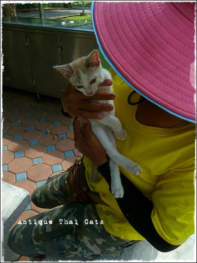 タイのヲソト猫155 捨て猫君 ジアプ เจียบ 帽子 หมวก hat 鈴 กระดิ่ง bell 野良猫 Stray cats แมวจรจัด ヲソト猫 タイ Thai ไทย ルンピニ公園 Lumpini park สวนลุมพินี