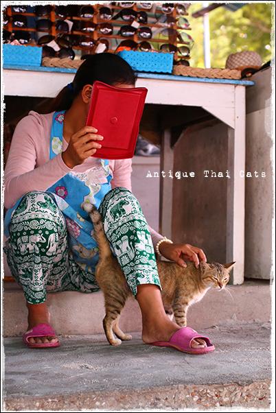 ラーン島の猫 猫の嬉しい顔 เกาะล้าน Koh laan Island ヌアンビーチ หาดนวล Nual beach タイ ヲソト 野良猫 地域猫 stray alley cat Thailand แมว ไทย