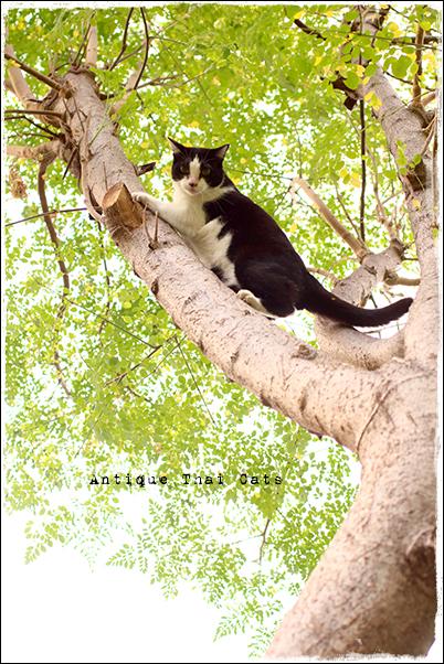 タイのヲソト猫165 通りゃんせ状態 野良猫 Stray cats แมวจรจัด ヲソト猫 タイ Thai ไทย ルンピニ公園 Lumpini park สวนลุมพินี