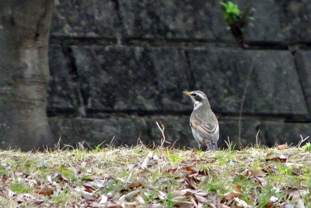 DSC_2417庭の鳥