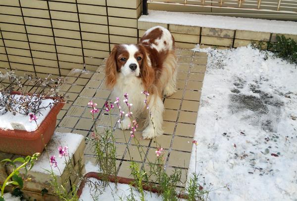王子と雪と16012