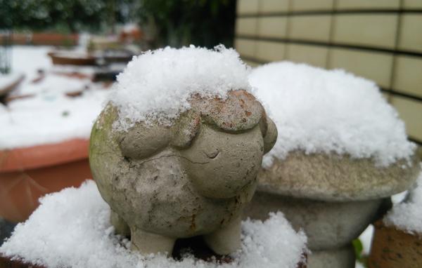 雪降ったよー1601243