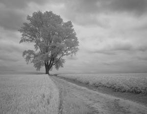 哲学の樹2