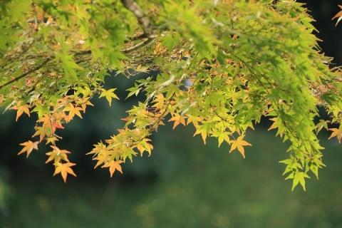 07 小石川後楽園