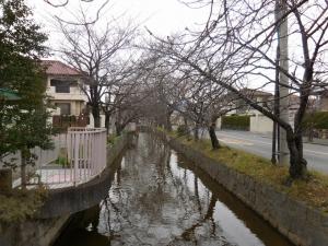 20160123_06玉串川桜並木