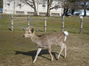 20160221_08奈良公園