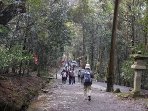 20160221_11春日神社樹林