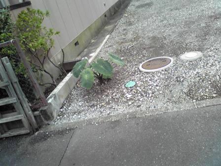 2015_09_28_御殿場・岳南・箱根SD1_224