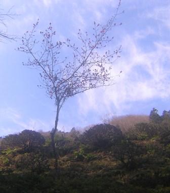 2016_01_11_川上山若宮八幡神社_033