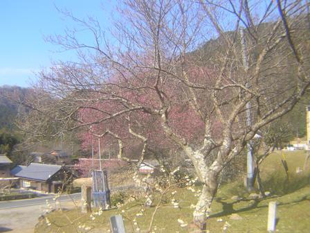 2016_01_11_川上山若宮八幡神社_177