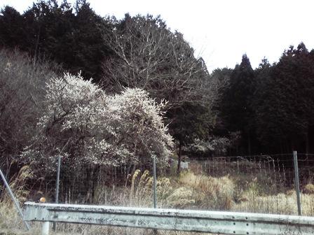 2016_03_10_田村神社_012