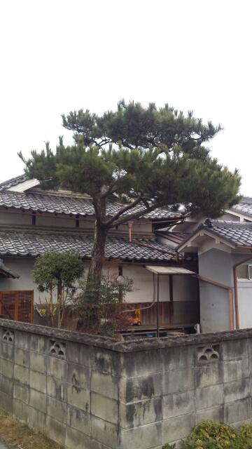 pine_b1.jpg