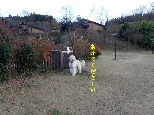 PC190117-2.jpg