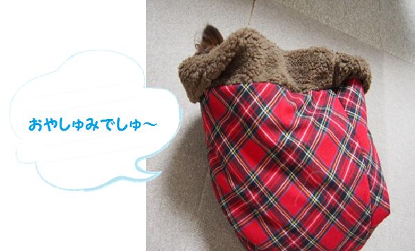 おやすみなしゃ~い☆