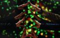 Mステクリスマスツリー嵐