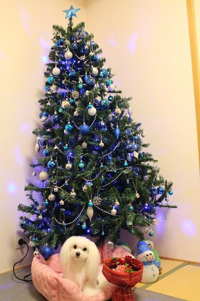 2015.12.28 クリスマスプレゼントはピンクの新車♪-1