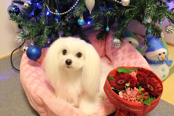 2015.12.28 クリスマスプレゼントはピンクの新車♪-2