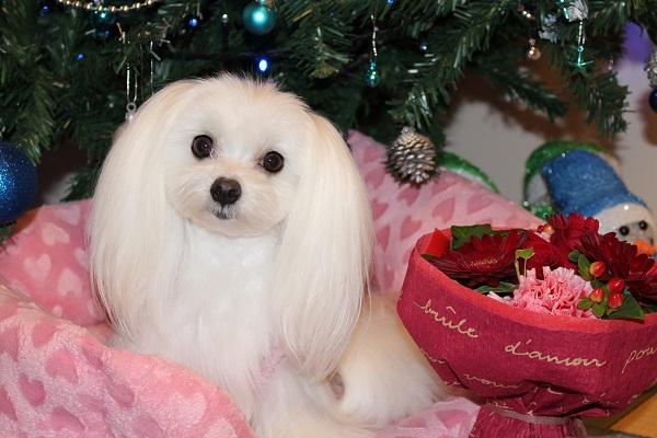 2015.12.28 クリスマスプレゼントはピンクの新車♪-3