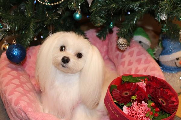 2015.12.28 クリスマスプレゼントはピンクの新車♪-4